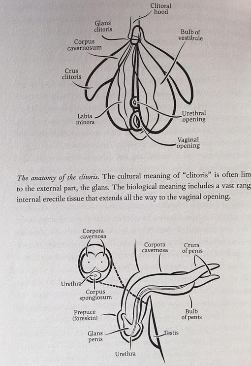 sex organs