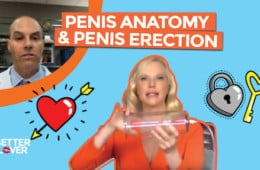 Penis Anatomy And Erection Video