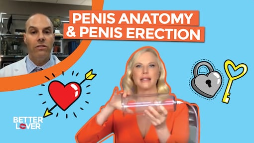 https://personallifemedia.com/wp-content/uploads/2019/10/Penis-Anatomy-and-Erection.jpg